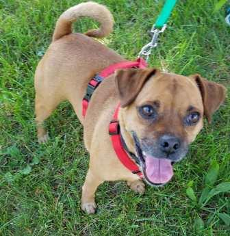 SAVE pet rescues of the week: Meet Mack and Felicity - Planet